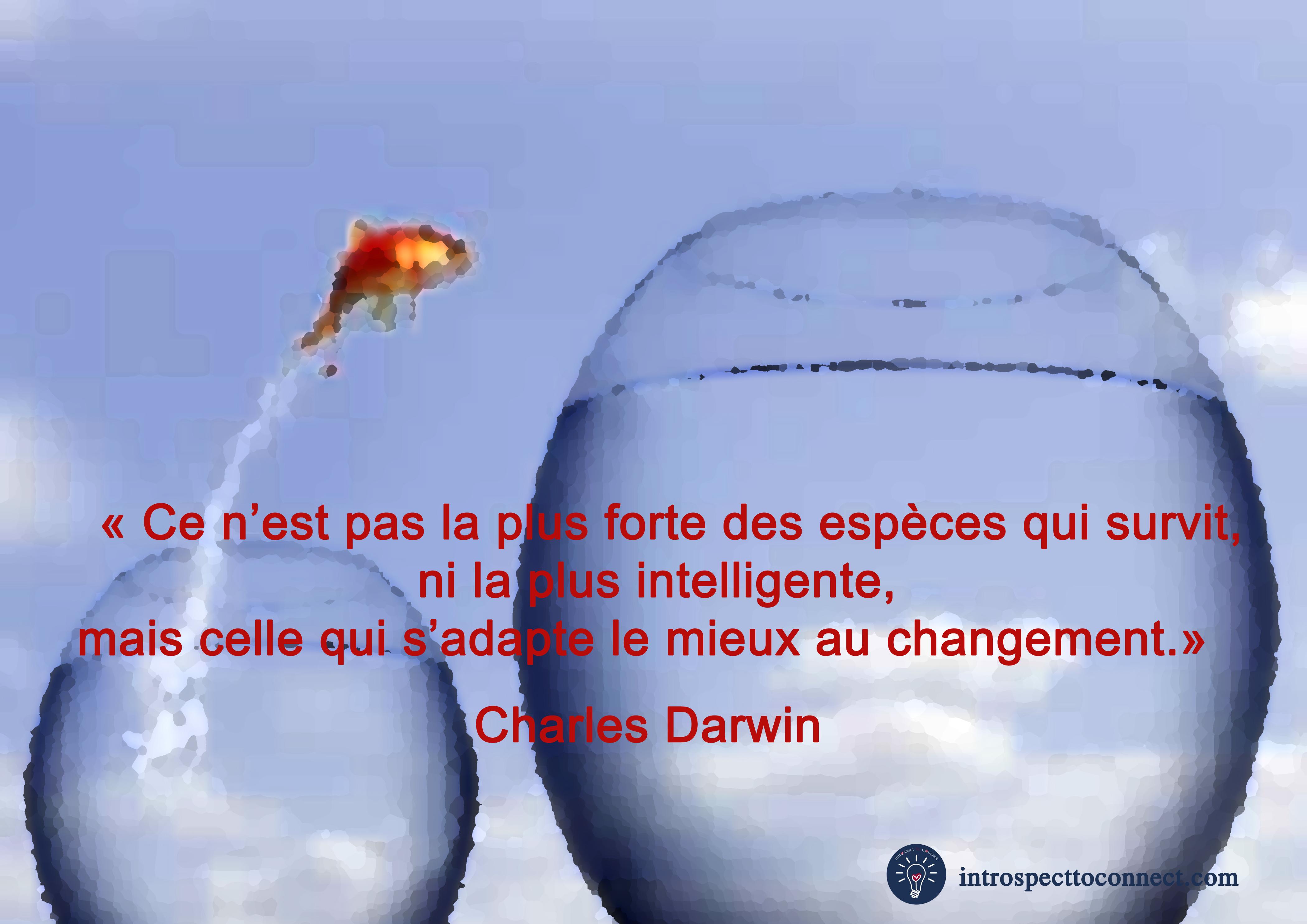 changement 2 darwin copie.jpg